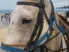 Horse Riding on Hua Hin Beach