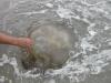 Beware of the Jellyfish